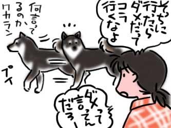 犬道!! シバツレ流8_b0057675_2130382.jpg