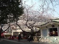 春が来た!(2012年4月5日)_b0101975_13514489.jpg