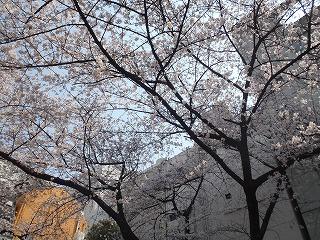 春が来た!(2012年4月5日)_b0101975_135255100.jpg