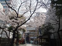 春が来た!(2012年4月5日)_b0101975_13562855.jpg