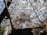 春が来た!(2012年4月5日)_b0101975_1357146.jpg