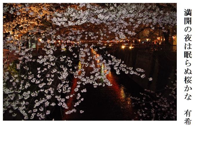 夜桜_a0248481_23591969.jpg