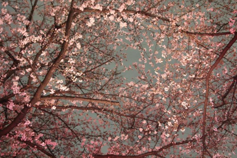 桜咲く_f0141609_217424.jpg