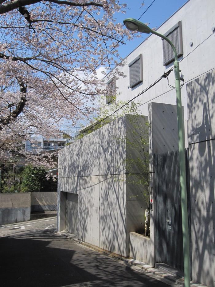 桜の季節_b0227217_13581539.jpg