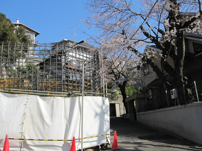 桜の季節_b0227217_1455240.jpg