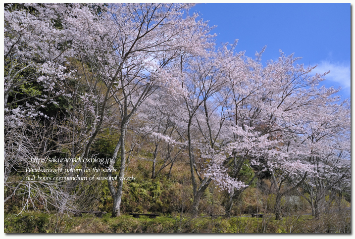 SAKURA 2012 ~天竜 鳥羽山公園桜~_f0235723_203452100.jpg