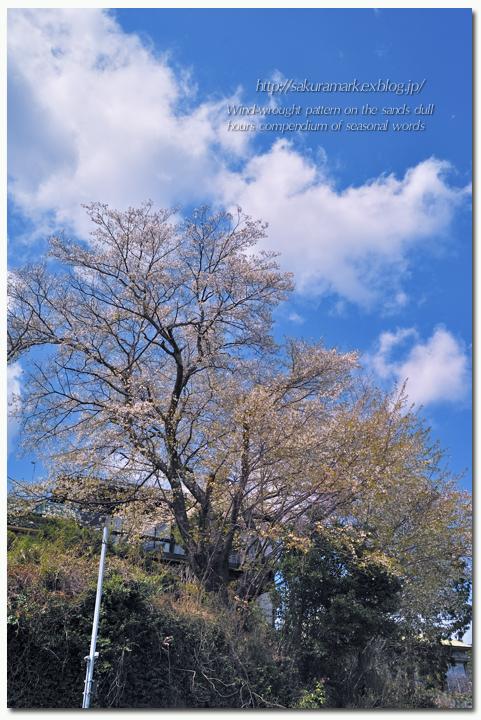SAKURA 2012 ~断崖に咲く~_f0235723_2034988.jpg