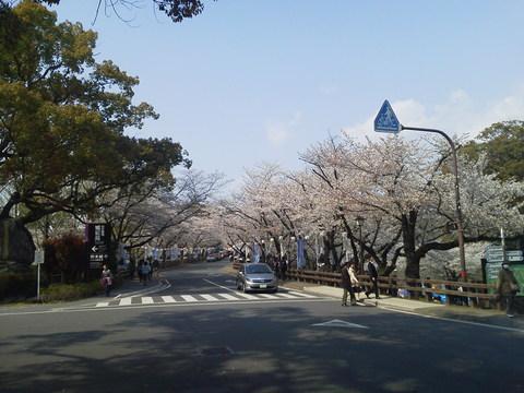 桜の名所熊本城_e0184224_819081.jpg