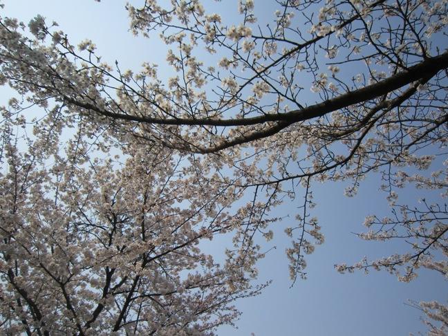 2012年4月5日(木) 大安吉日_f0191324_8233421.jpg