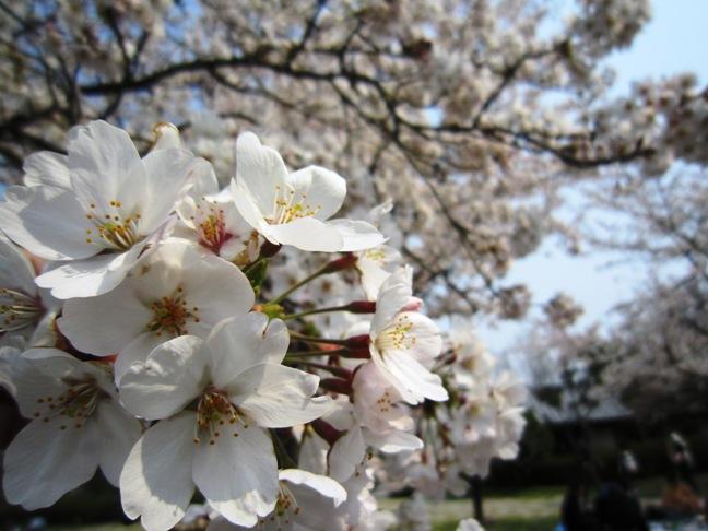 2012年4月5日(木) 大安吉日_f0191324_823434.jpg