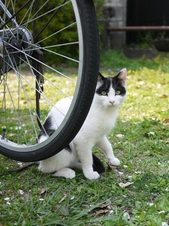 そと猫のお友だち ハートくんギガミケちゃん編。_a0143140_23161063.jpg