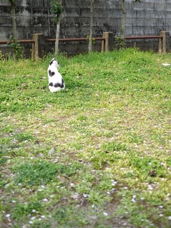 そと猫のお友だち ハートくんギガミケちゃん編。_a0143140_231927.jpg