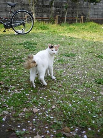そと猫のお友だち ハートくんギガミケちゃん編。_a0143140_23201344.jpg