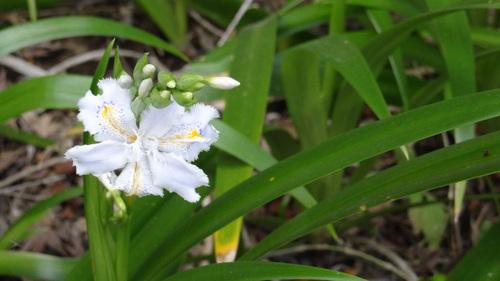 春の訪れ♪_e0240147_23464947.jpg