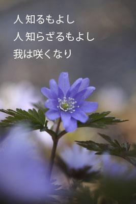 b0088971_1144273.jpg