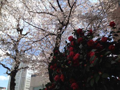 栄の桜_e0233674_11123367.jpg