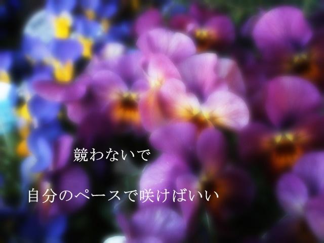 d0199578_9265725.jpg