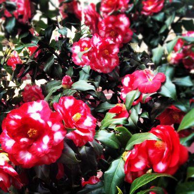 花の季節_c0204289_2342189.jpg