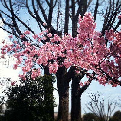 花の季節_c0204289_2342387.jpg