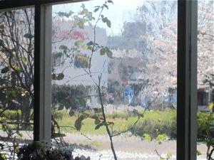 浜松の桜どころ_a0077203_14351086.jpg