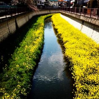 春爛漫_c0197505_0153763.jpg