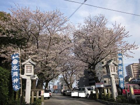北岡神社の桜_b0228113_8525224.jpg