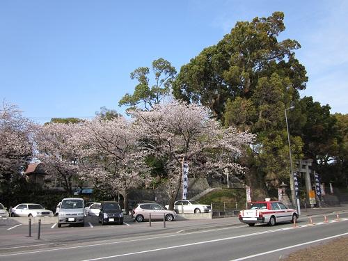 北岡神社の桜_b0228113_8531399.jpg