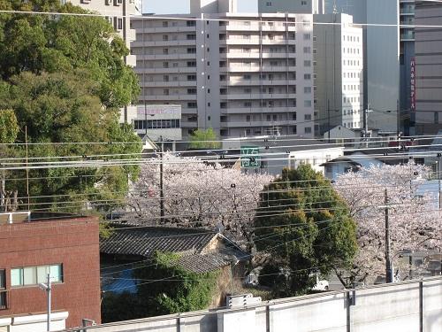 北岡神社の桜_b0228113_8535529.jpg