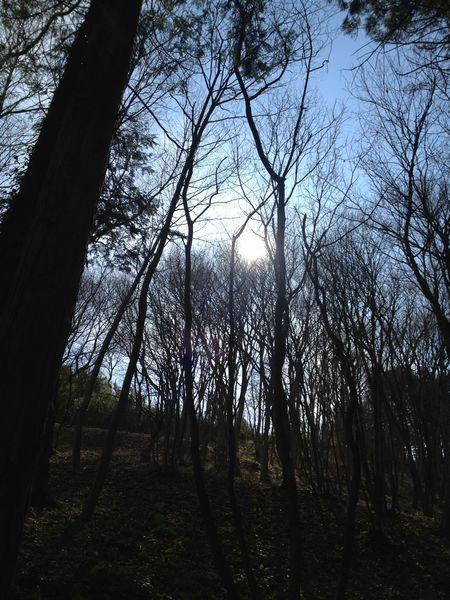 森林浴_c0141013_1359457.jpg