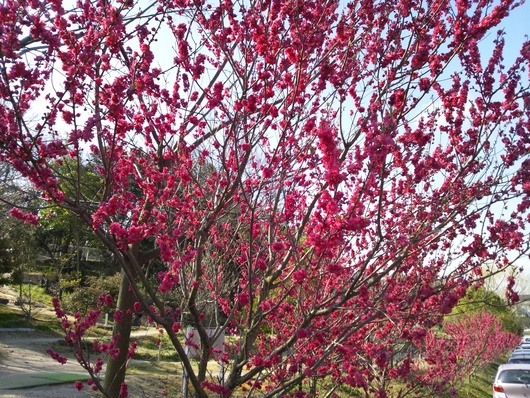 春です・・・♪_b0247223_1035533.jpg