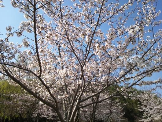 春です・・・♪_b0247223_10421100.jpg