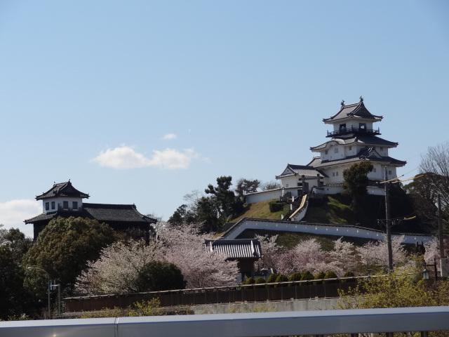桜満開_a0253729_16372879.jpg