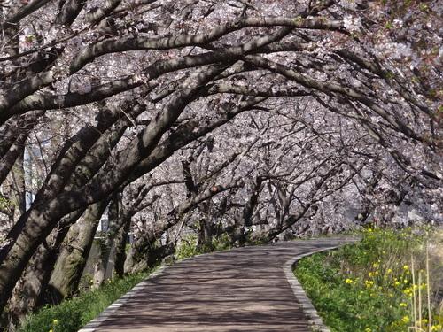 桃・桜_e0240147_14545885.jpg