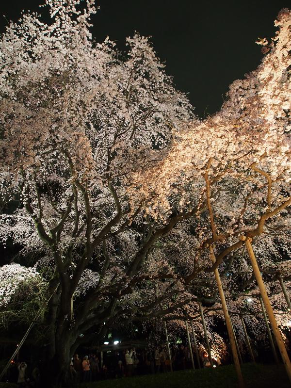 夜桜@六義園_a0100959_20222270.jpg
