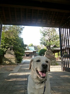 with dog  桜の散歩道を歩いて再び・・・_a0165160_65589.jpg