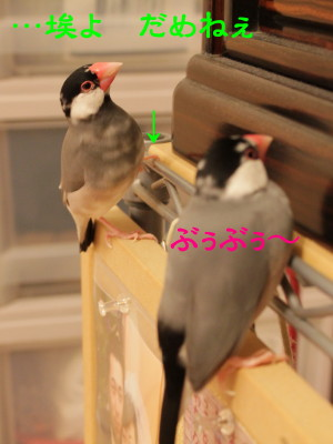 b0158061_21473532.jpg