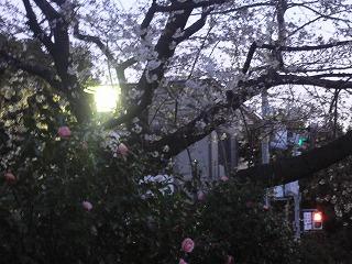 桜。_d0137764_9461439.jpg