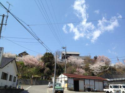花冷え_d0193277_2141650.jpg