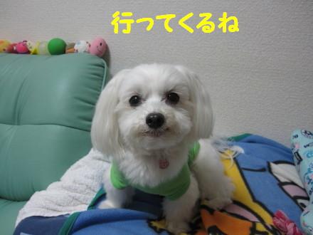 b0193480_1619342.jpg