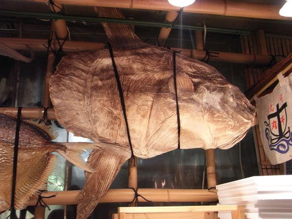 北陸お魚の旅・その5 (サービスエリアの魚たち) 120318~20_c0237483_1002156.jpg