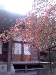 **春の鎌倉さんぽn゜2**_d0147488_23233789.jpg