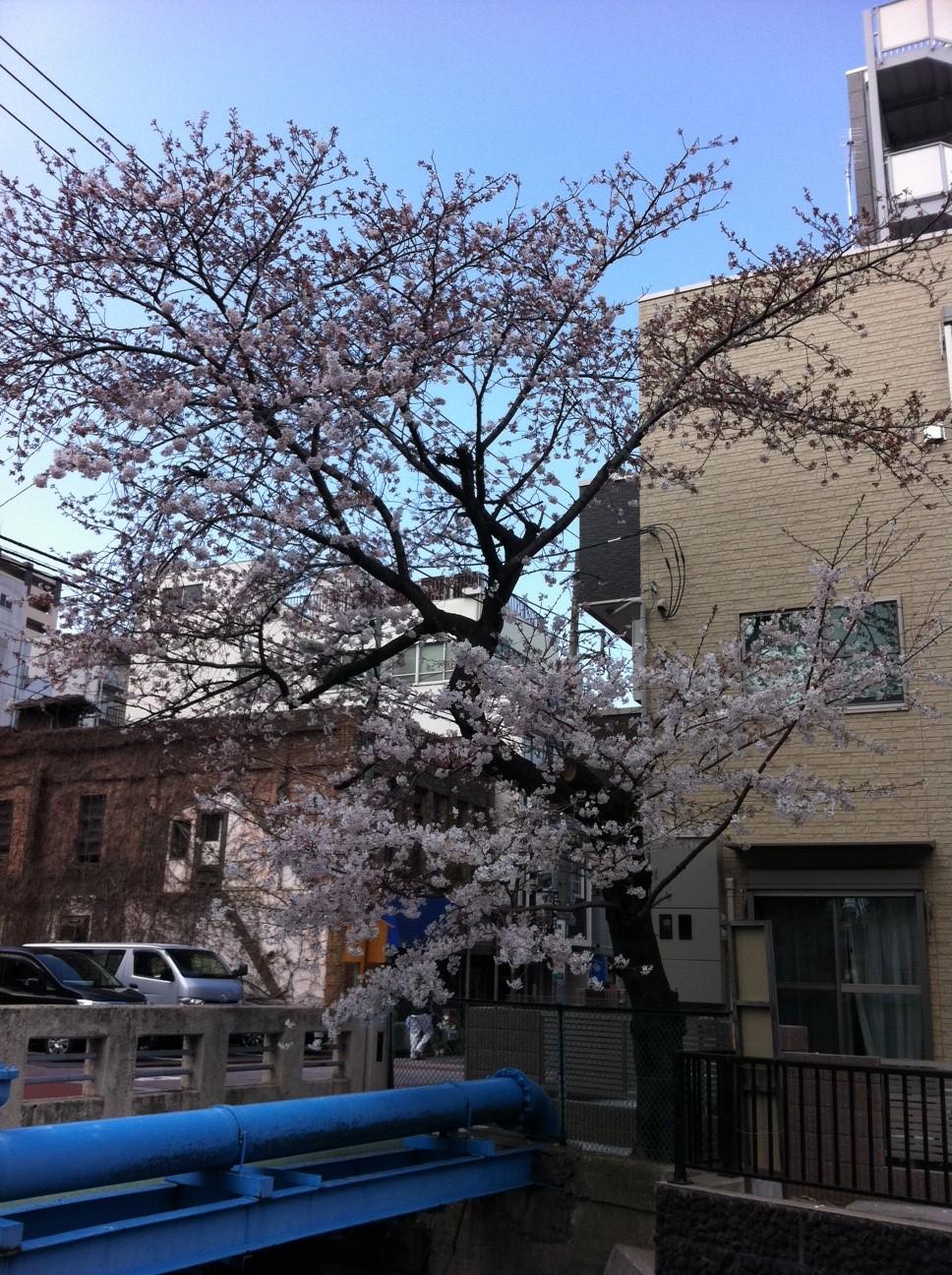 桜と共にやってきた、意外な訪問者。_a0112393_162937100.jpg