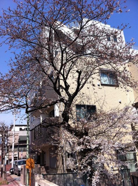 桜と共にやってきた、意外な訪問者。_a0112393_16303272.jpg