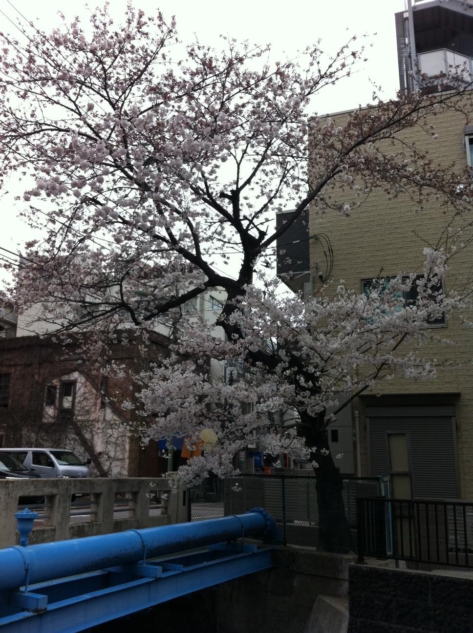 桜と共にやってきた、意外な訪問者。_a0112393_1630899.jpg