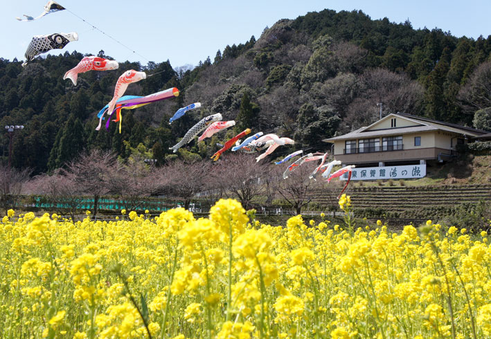 鯉泳ぎ糸桜満開_b0145296_744253.jpg