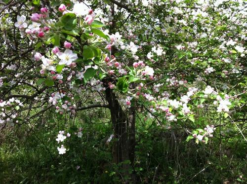 セルジョさんのリンゴ農家に行ってきました_f0106597_3381674.jpg