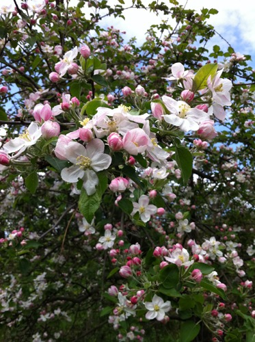 セルジョさんのリンゴ農家に行ってきました_f0106597_33854100.jpg