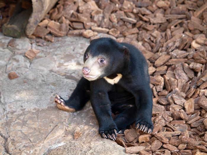 春は動物の赤ちゃんがお目見え!「ひと足早く、動物園に行こう!」