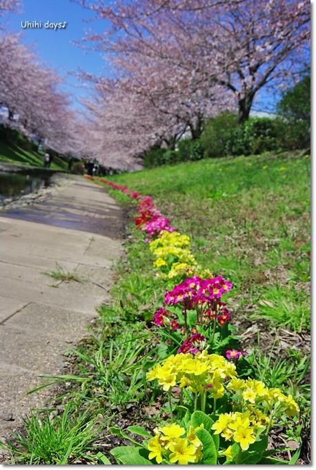 桜の花とチューリップ♪ 江川せせらぎ緑道2012_f0179404_21294820.jpg