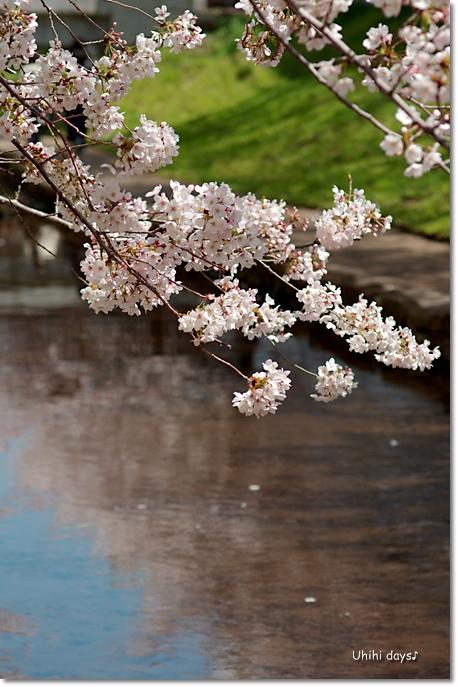 桜の花とチューリップ♪ 江川せせらぎ緑道2012_f0179404_21305943.jpg